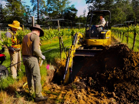 Dr. Nick Madden,  Dr. Paul Anamosa  and our  biodynamic consultant Andrew Beedy  digging a soil pit in our block of zinfandel planted in 1987