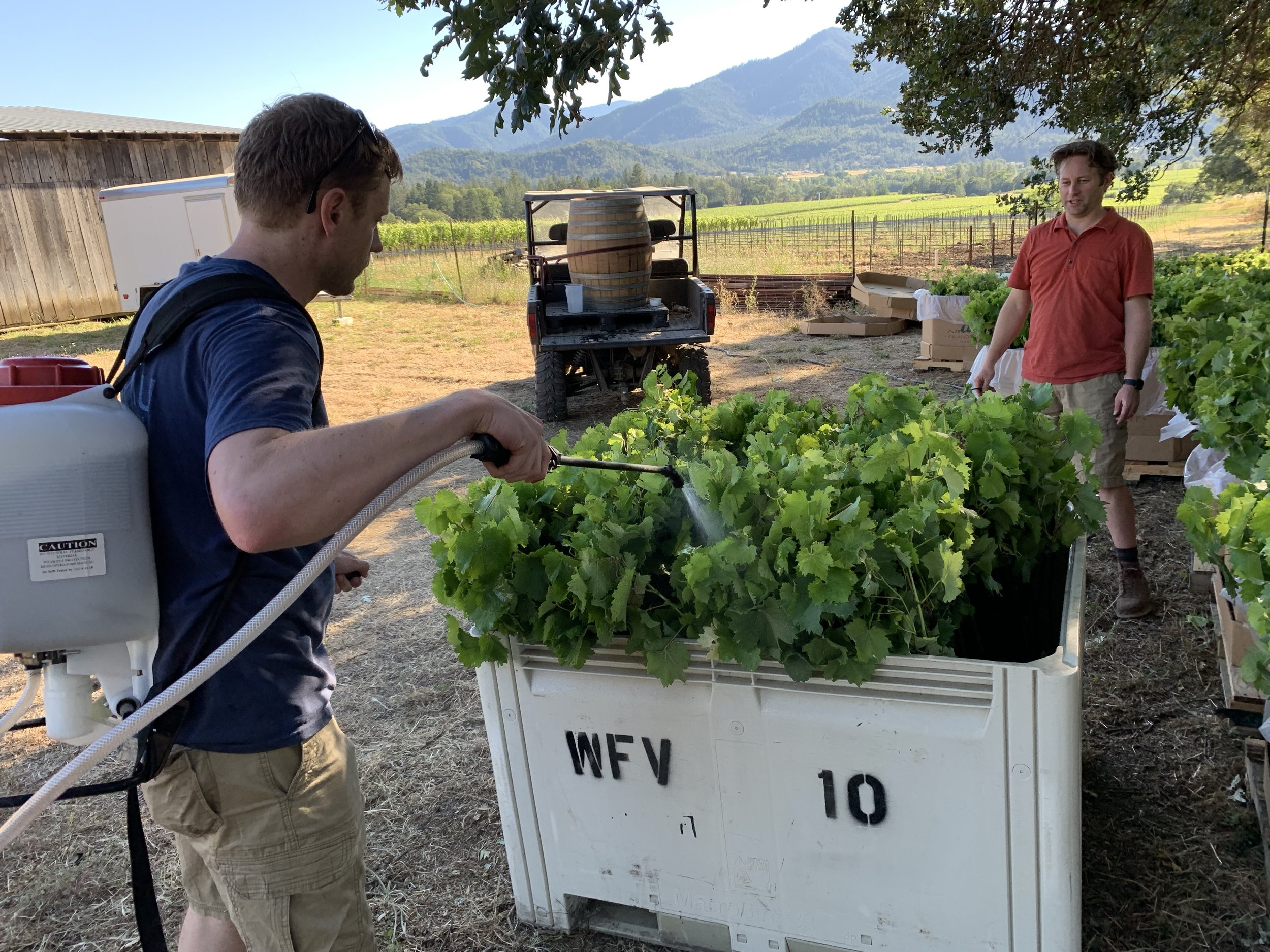 Troon winemakers Cary Willeford and Nate Wall apply BD 508 (horsetail) to new vines about to be planted at Troon Vineyard in Oregon's Applegate Valley .