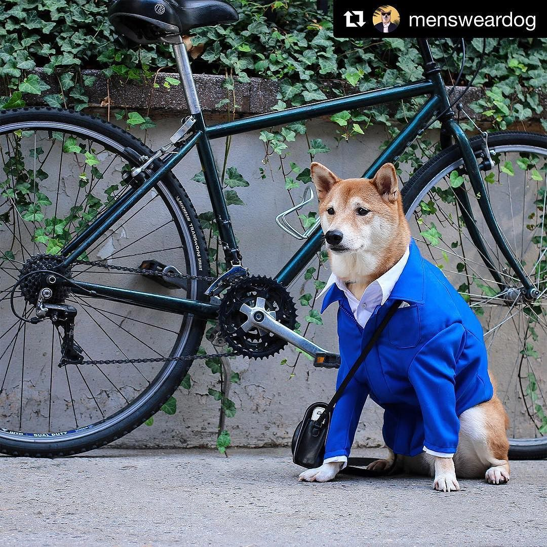 #Repost @mensweardog  ・・・  In loving tribute to Bill Cunningham, the OG street style spectator. Your presence, photographs and infectious smile will be missed immensely. Thank you for living your passion.   #BillCunningham  http://ift.tt/28XnQuH