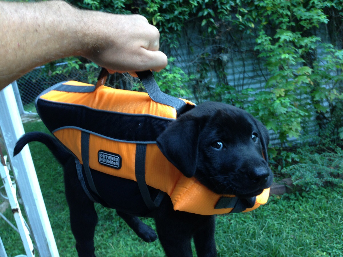 diacrit :      hanesonly :     I almost forgot my briefcase!     it contains important lab results