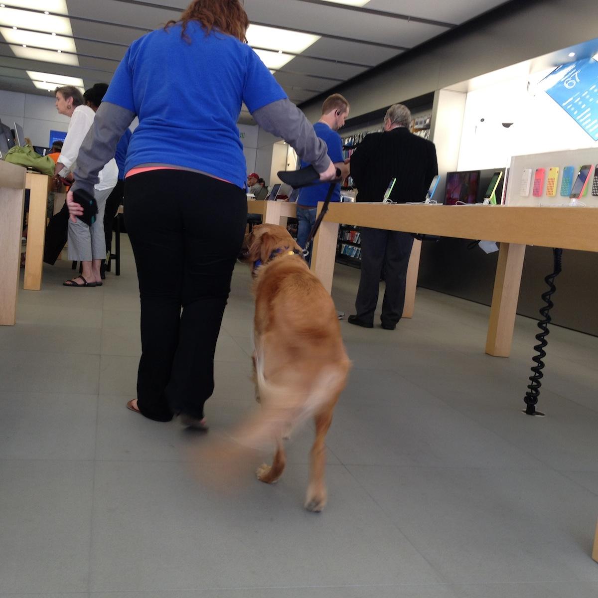 frassie-apple-store2.jpg