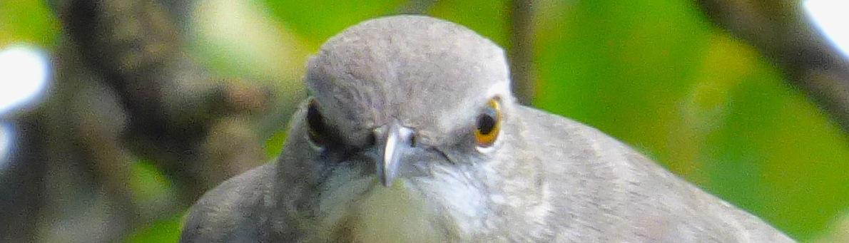 birdstraighton copy.JPG