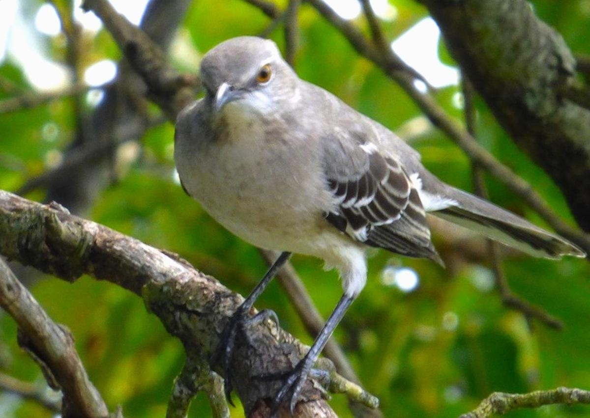bird closeup.JPG