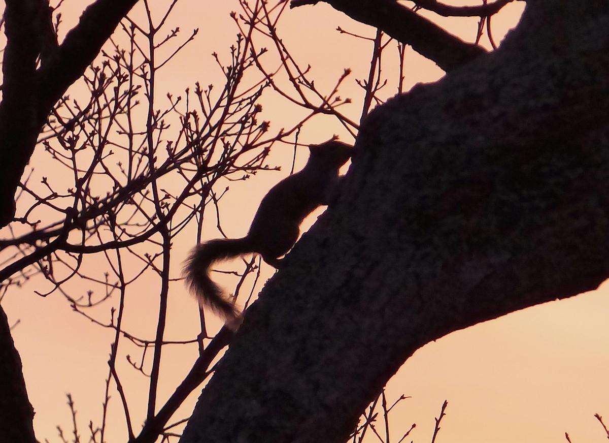 saturday squirrel.jpg