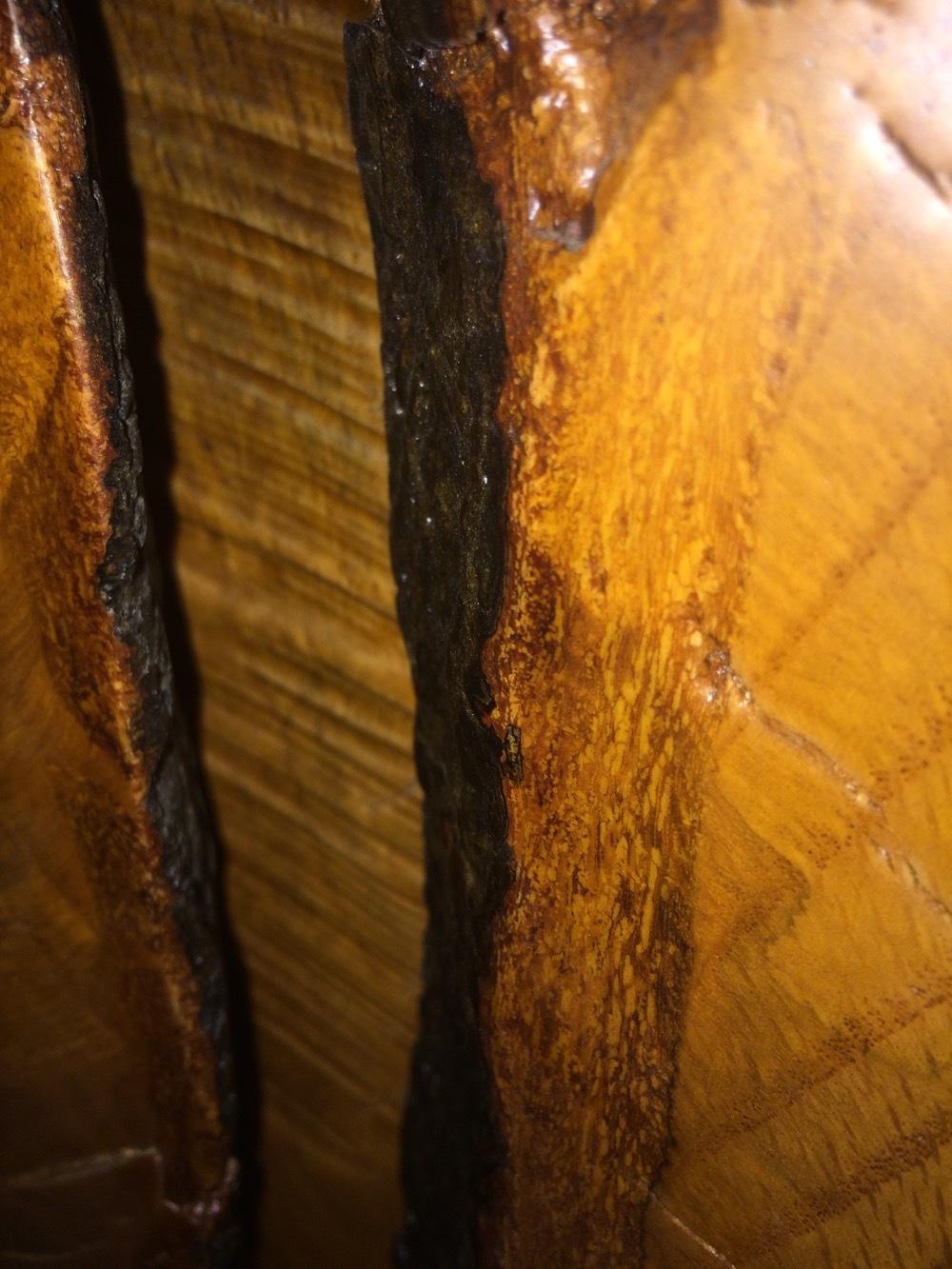 Oak-Slab-included-bark-84x45x110.JPG