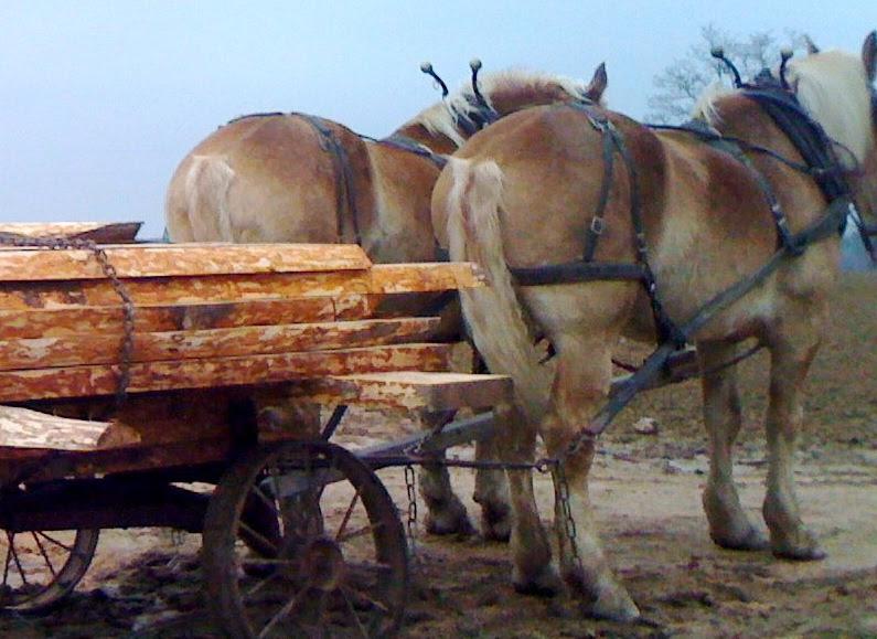 lumber-horses-800.jpg