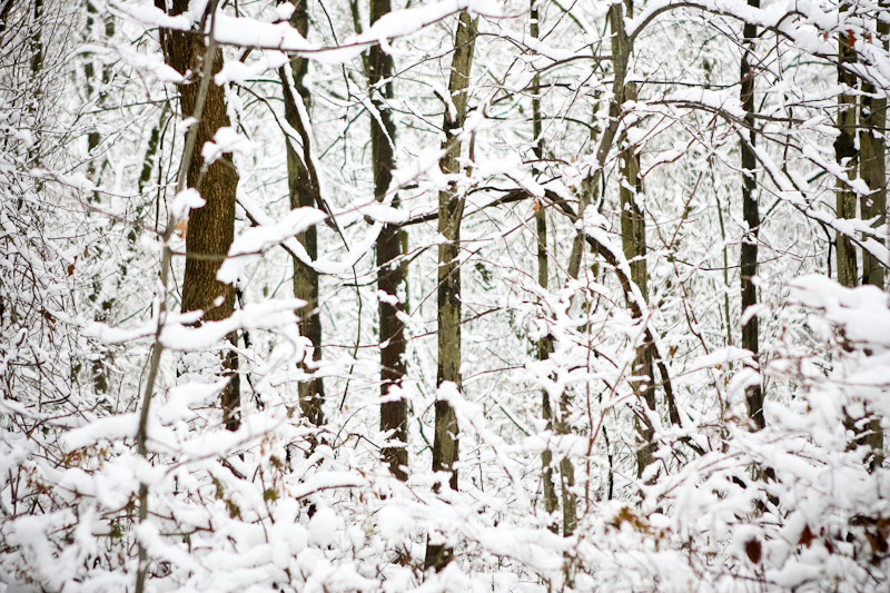 Snow covered woods in December