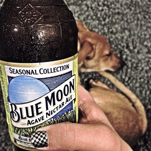 Blue Moon Agave Nectar Ale vía @natapaola en Instagram