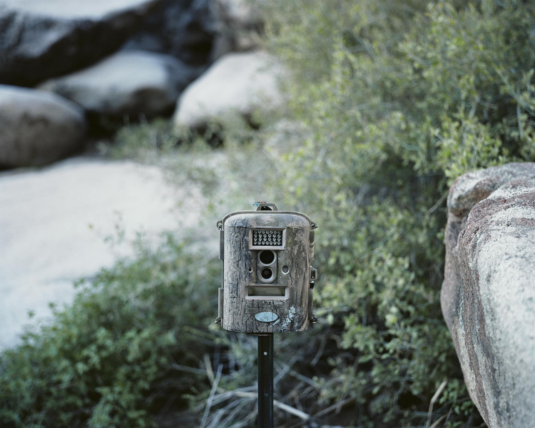 Taking..., Border Patrol Game Camera W157, Tinajas Altas, Arizona