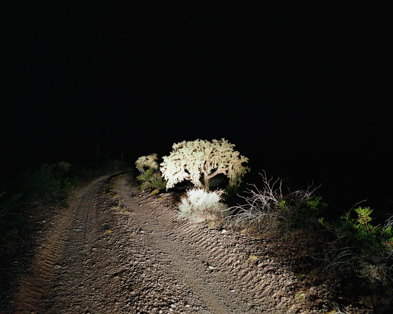 Nighttime Cholla, Barry M. Goldwater Bombing Range East, Arizona