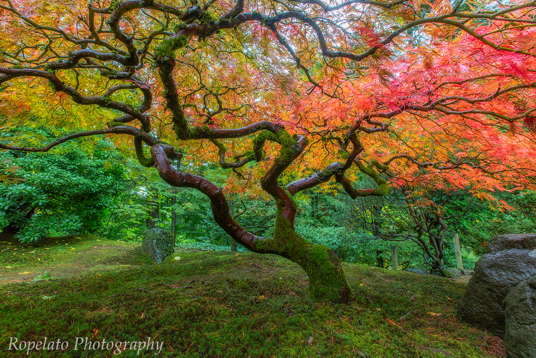 A shot from the Portland Japanese Garden edited on the SP3.