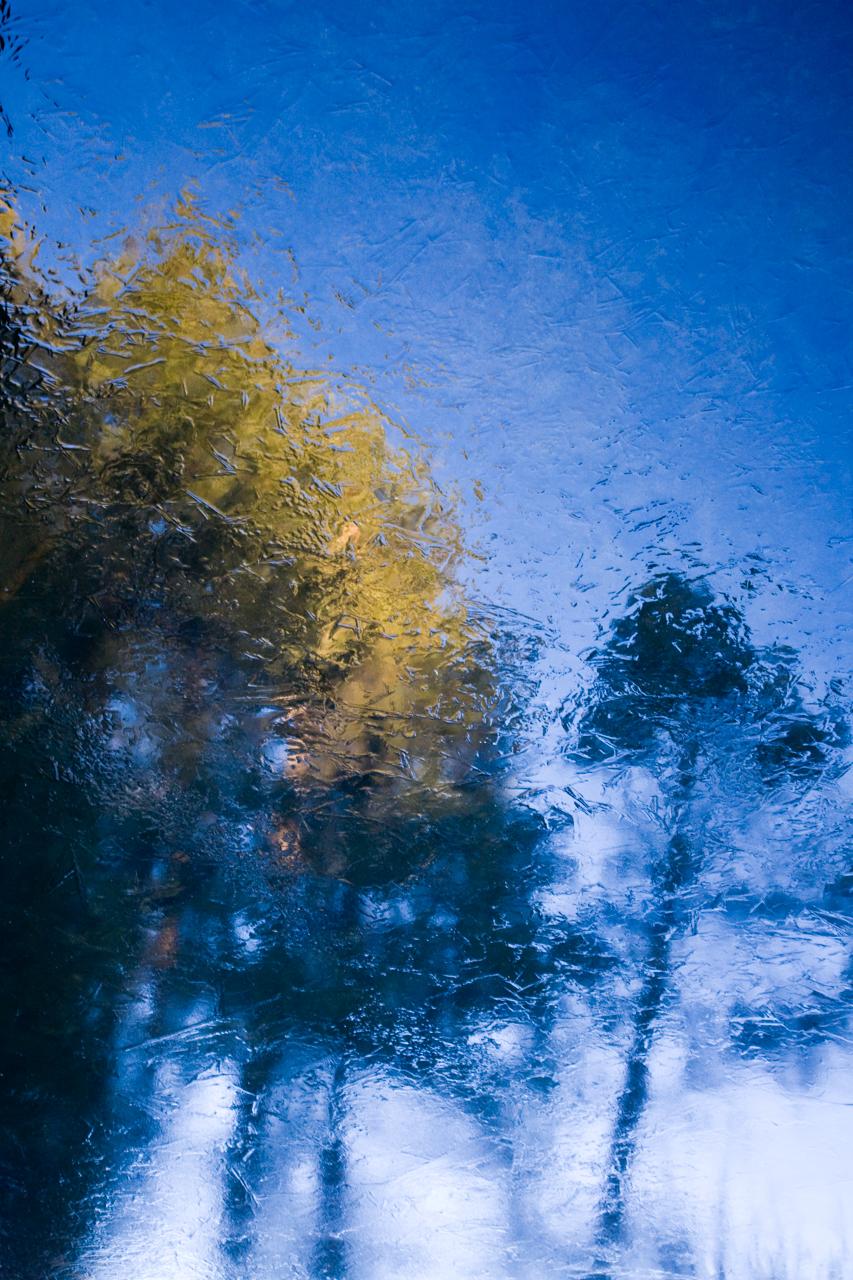 Monet Morning