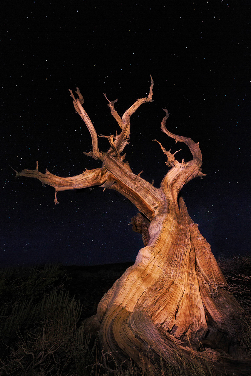 Father Tree