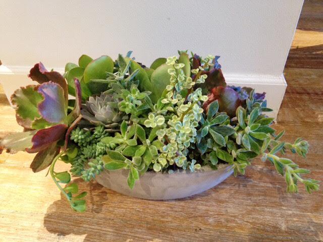 Medium succulent garden