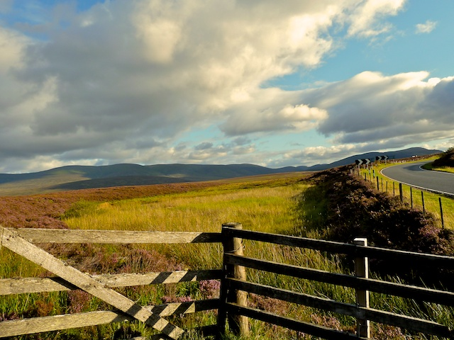 Skotland_aug10_00_144.jpg