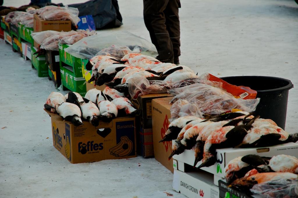 Greenland 2012 031.jpg