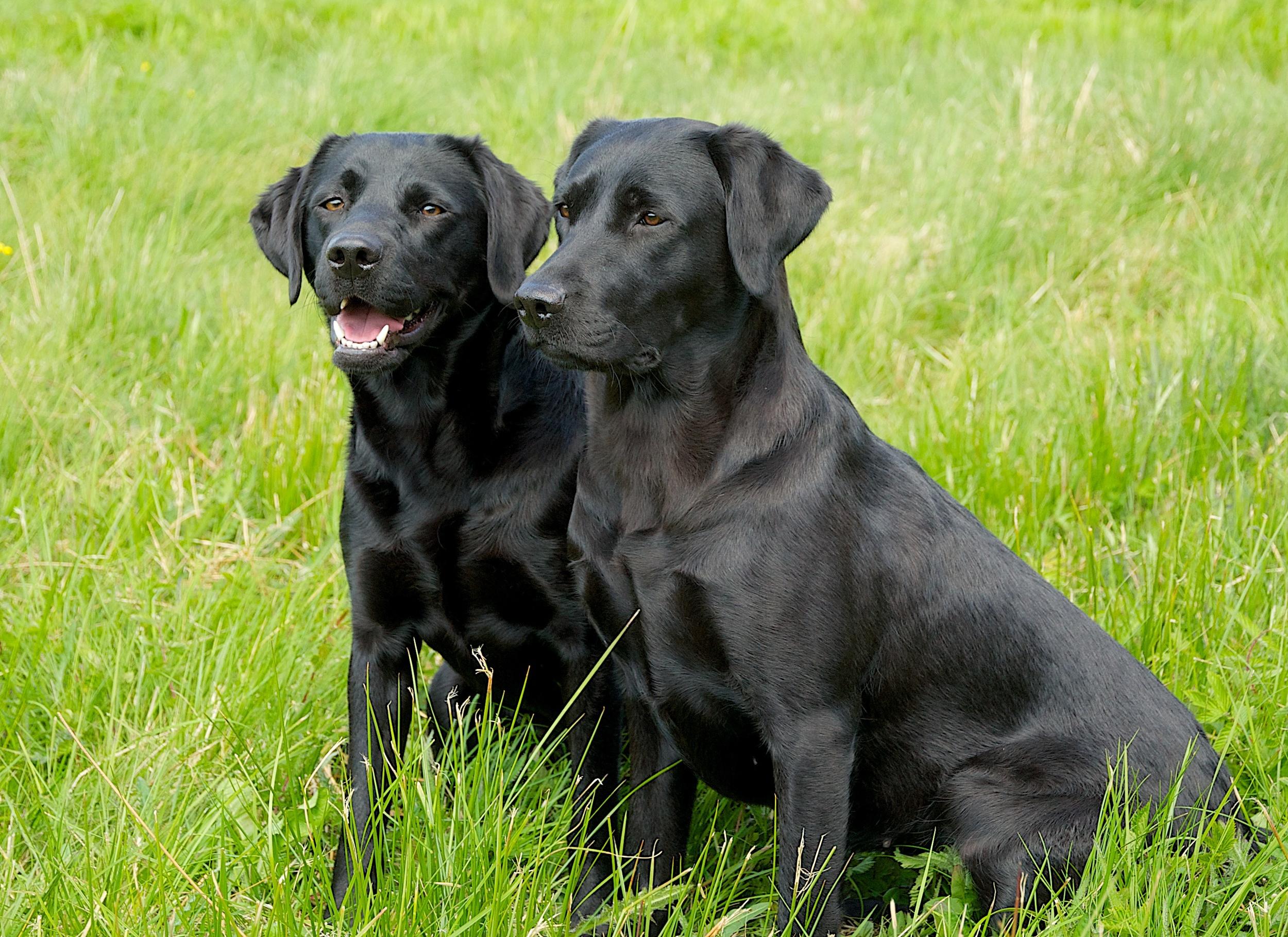 Bella og Mille