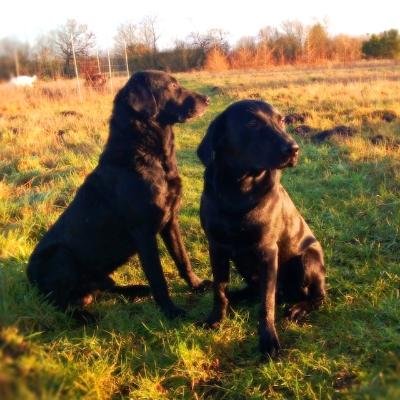Spencer (til Højre) sammen med Buddy, januar 2013