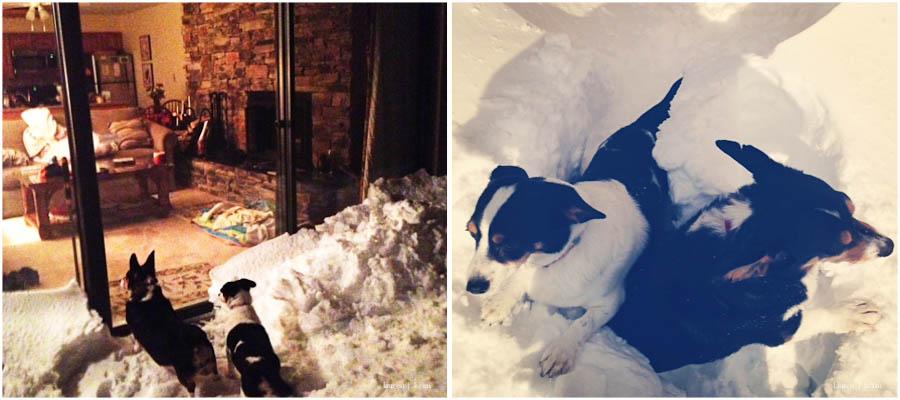 dogs in snow.jpg