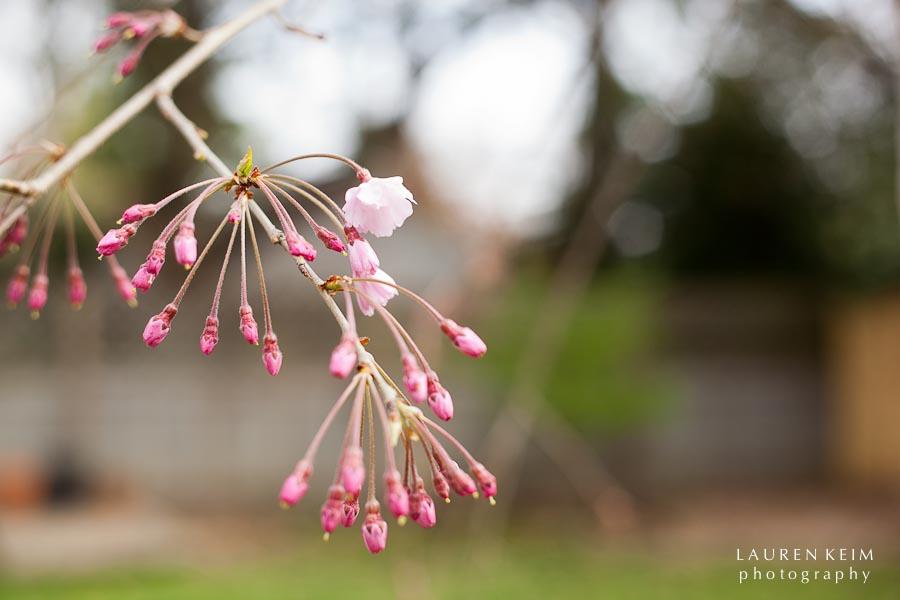 0312_spring garden1.jpg