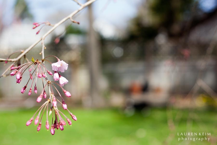 0312_spring garden10.jpg