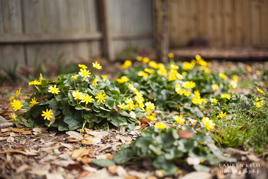 0312_spring garden3.jpg