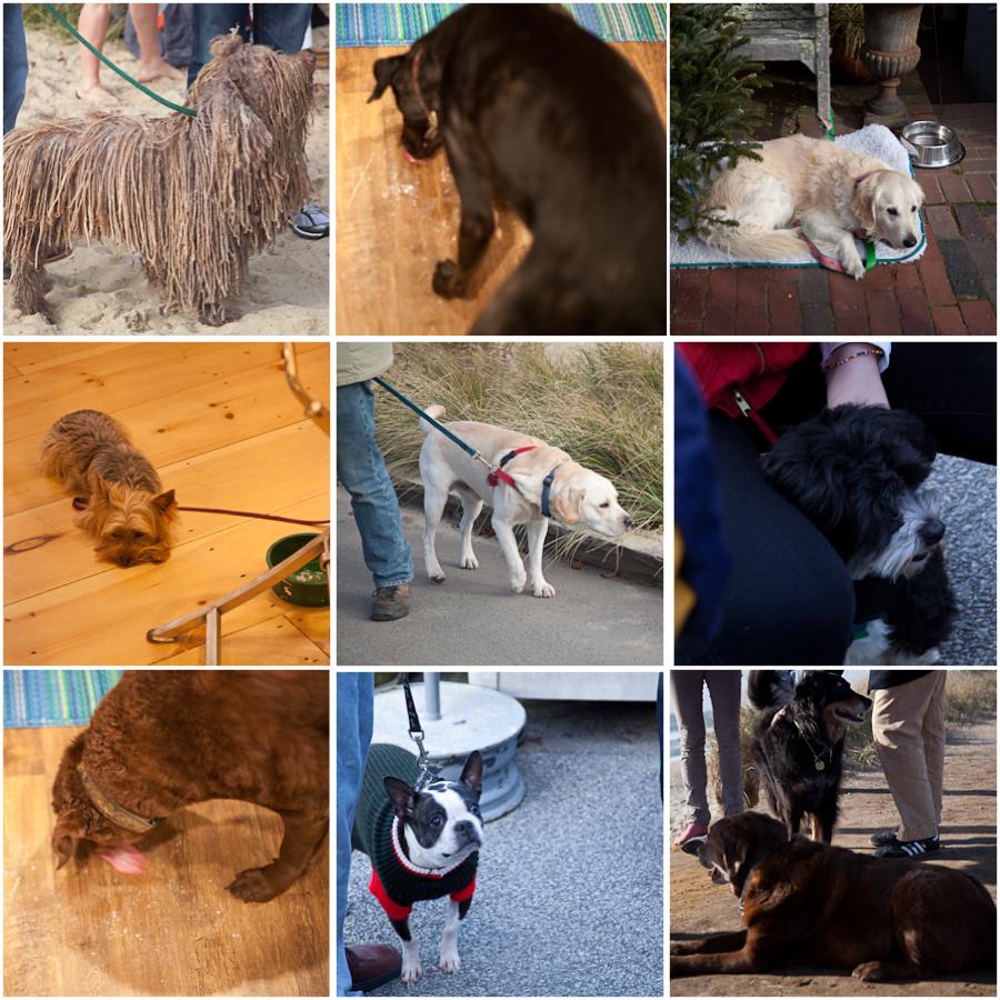 dogs in nantucket.jpg