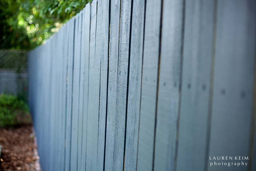 0512_Fenced_In2-2.jpg