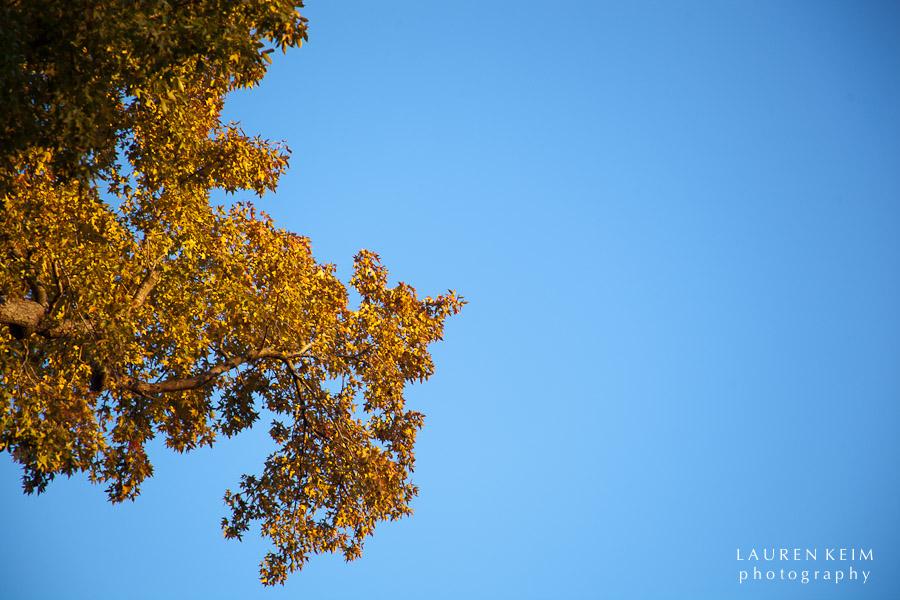 fall tree-1.jpg