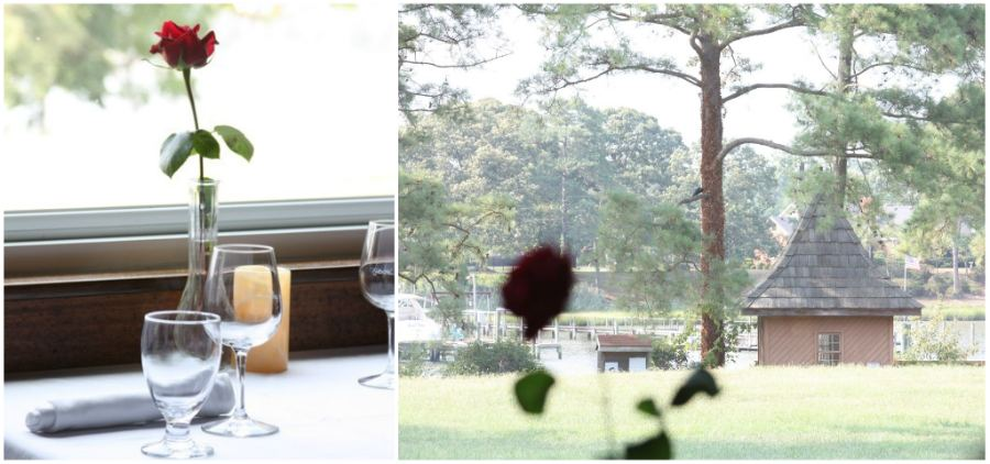 rose_collage.jpg