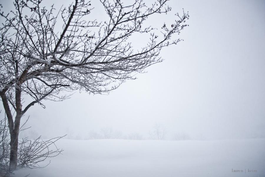 Dream Snow-2.jpg