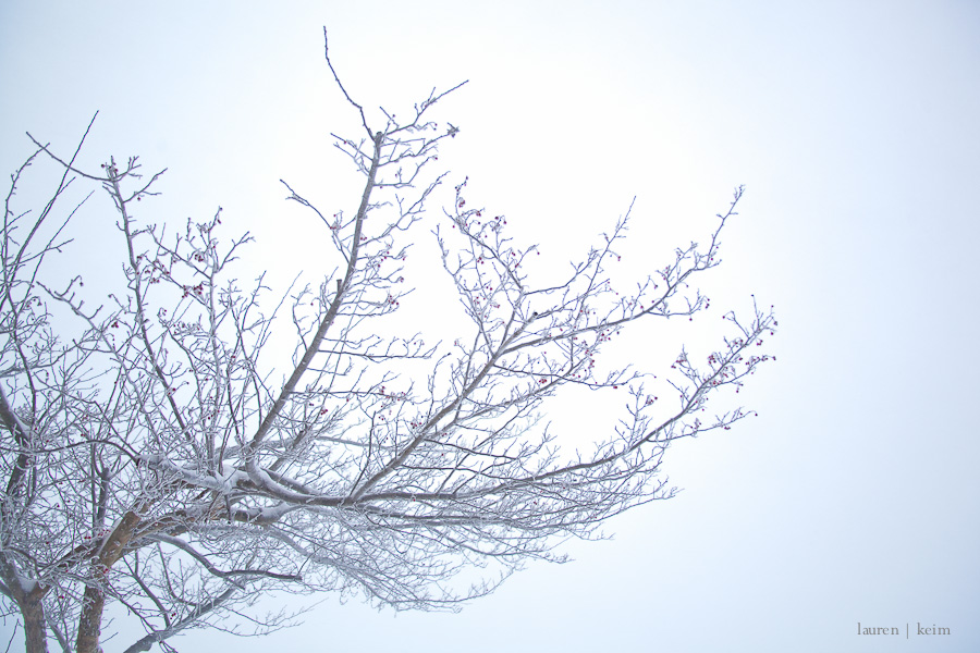 Dream Snow.jpg