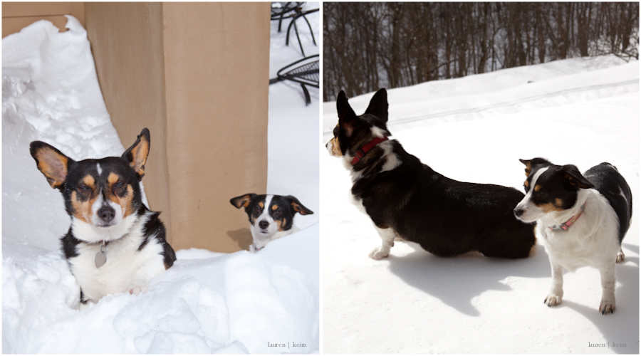 Doggie_Duo.jpg