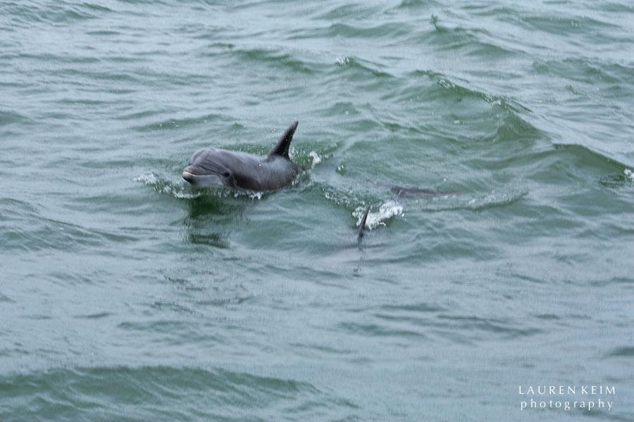 flipper-6.jpg