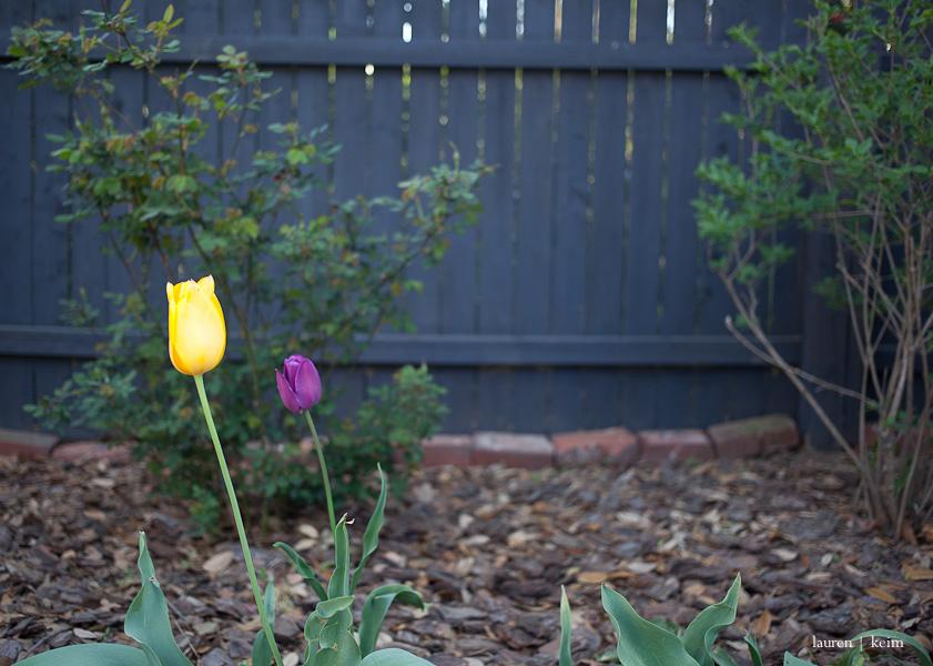 spring garden-4.jpg