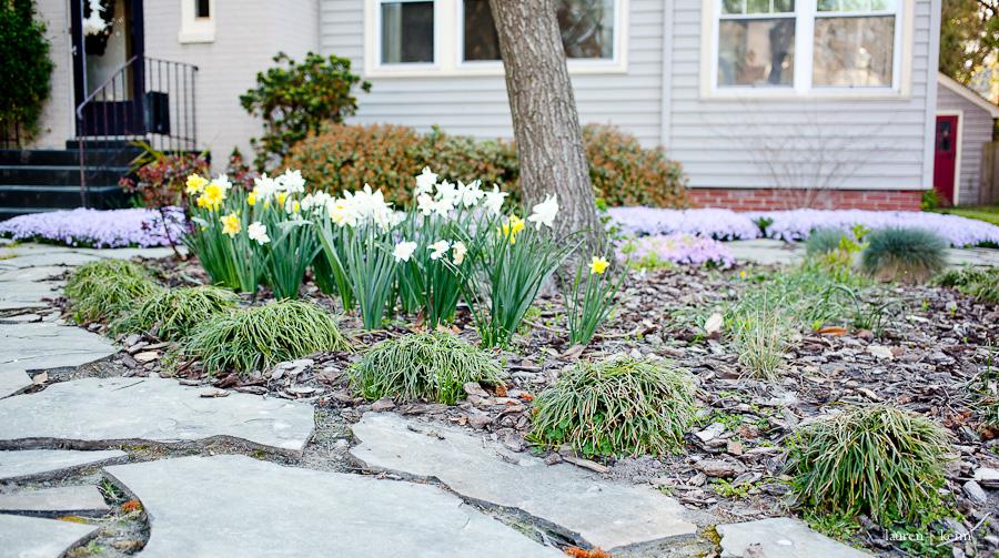spring garden-3.jpg