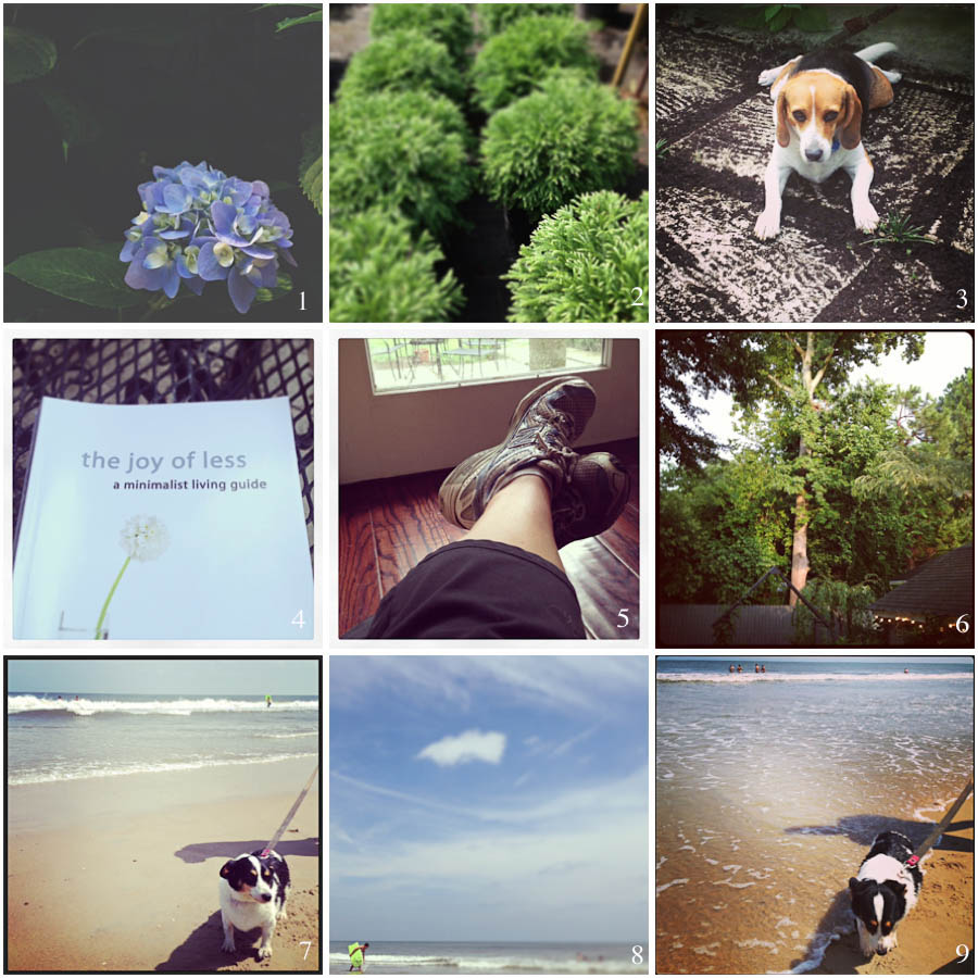 1. late summer surprise | 2. garden shopping | 3. bad beagle | 4. inspirational reading | 5. tired feet | 6. post-rain golden hour | 7. violet goes to the beach | 8. boogie board time | 9. violet is ready to go home