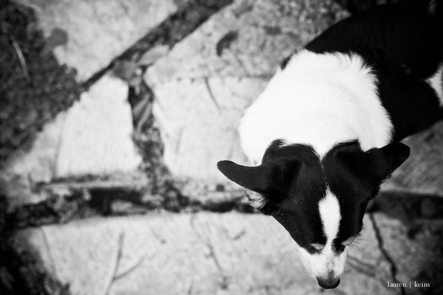 (photobomb) Violet in black and white