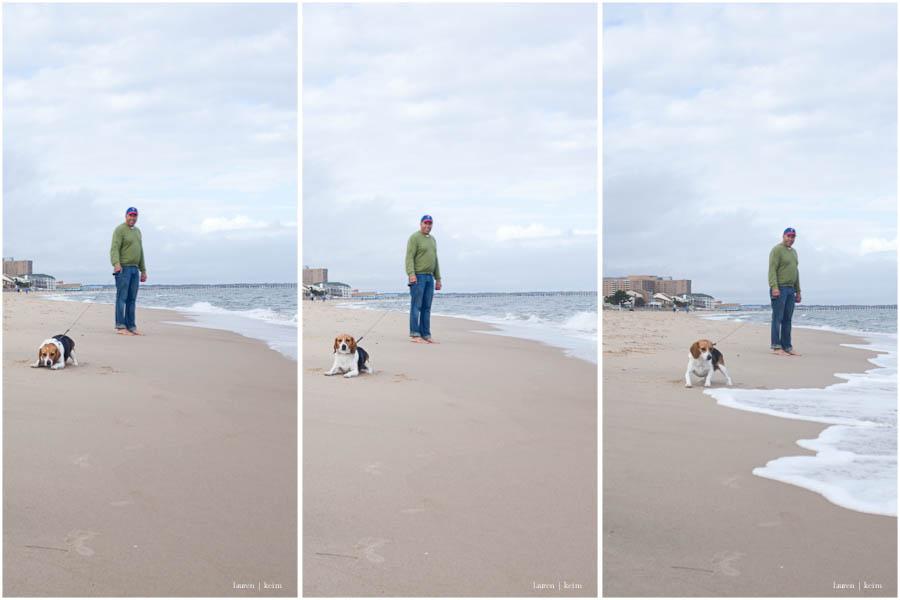 beagle at the water.jpg