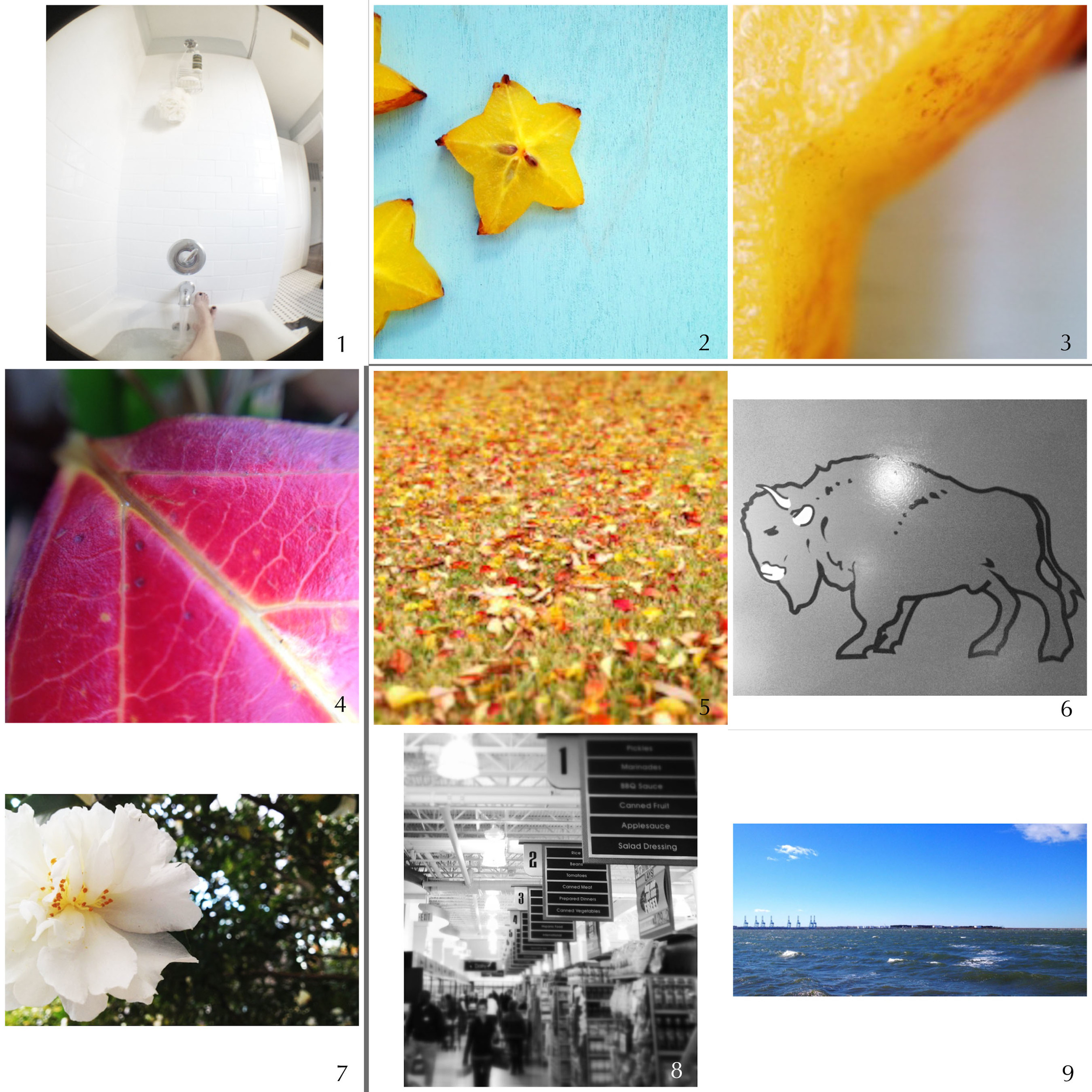 1. {fisheye} get well soon   2. starfruit   3. macro   4. macro   5. carpet of color   6. the dirty buffalo {wing night}   7. flower bower   8. busy day   9. wind-whipped waves