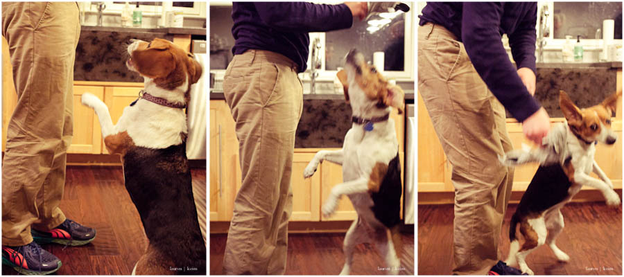 beagle_play.jpg