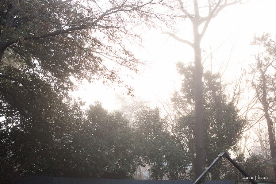 fog-11.jpg