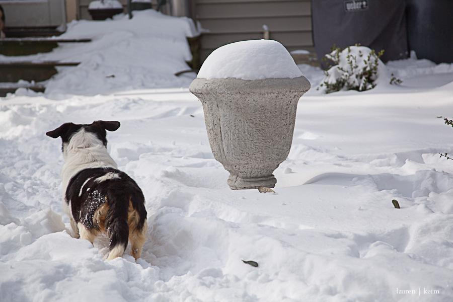 snow_hounds-89.jpg
