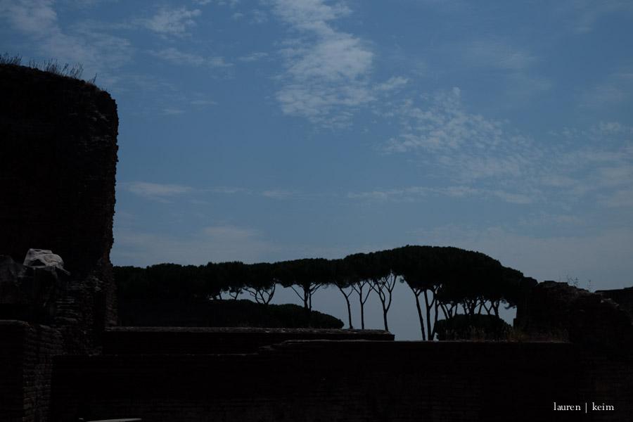 Umbrella Pines at the Palentine Hill