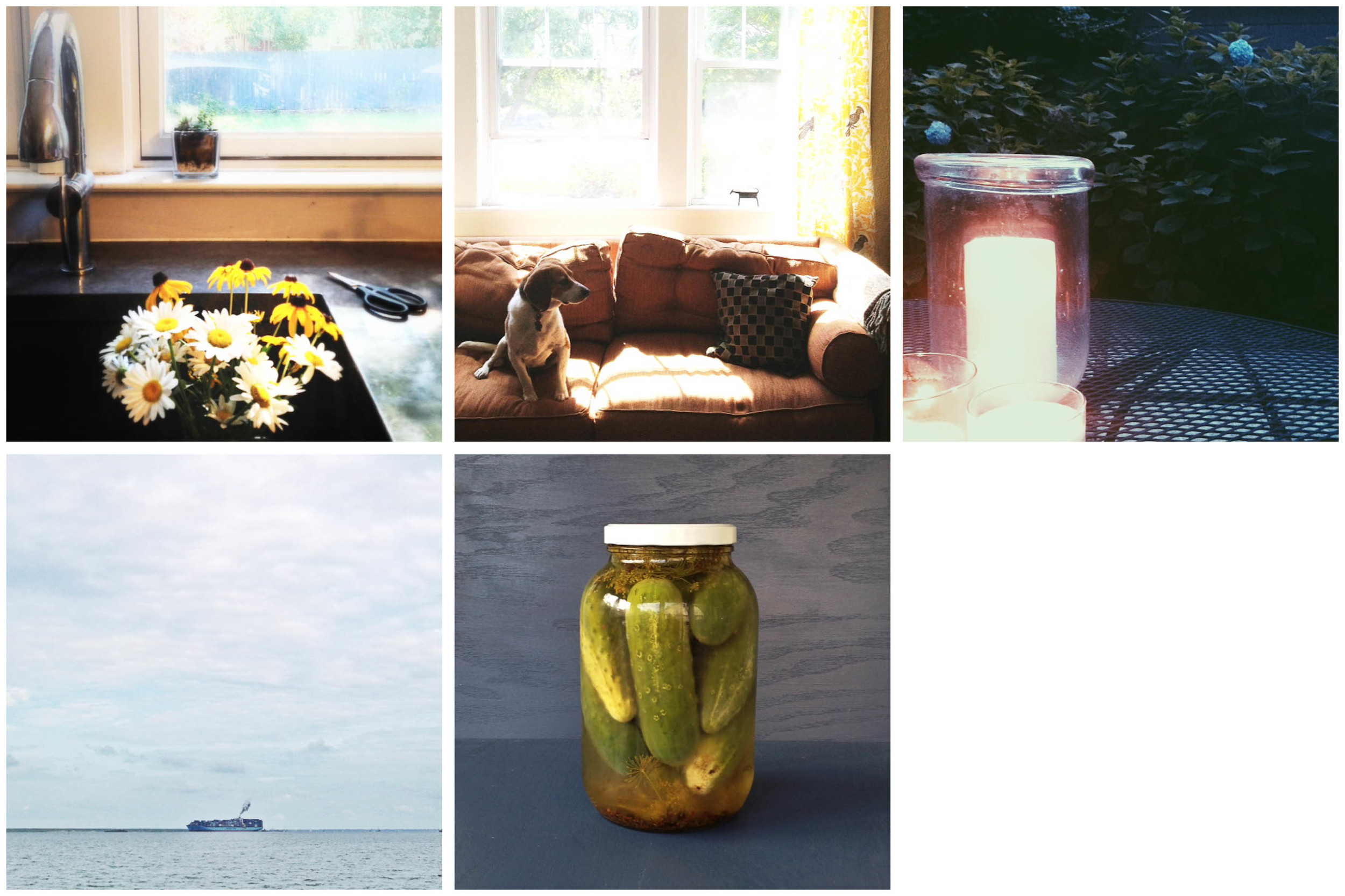 Row 1: Neel's garden comes inside | Lucy sneaks a snuggle in the sofa | Twilight time | Row 2. Traffic on the river | Neighborhood bounty