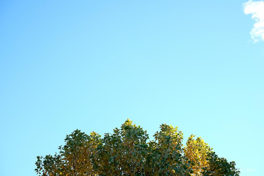 Fall creeps in. Fuji X-E2, 35 mm