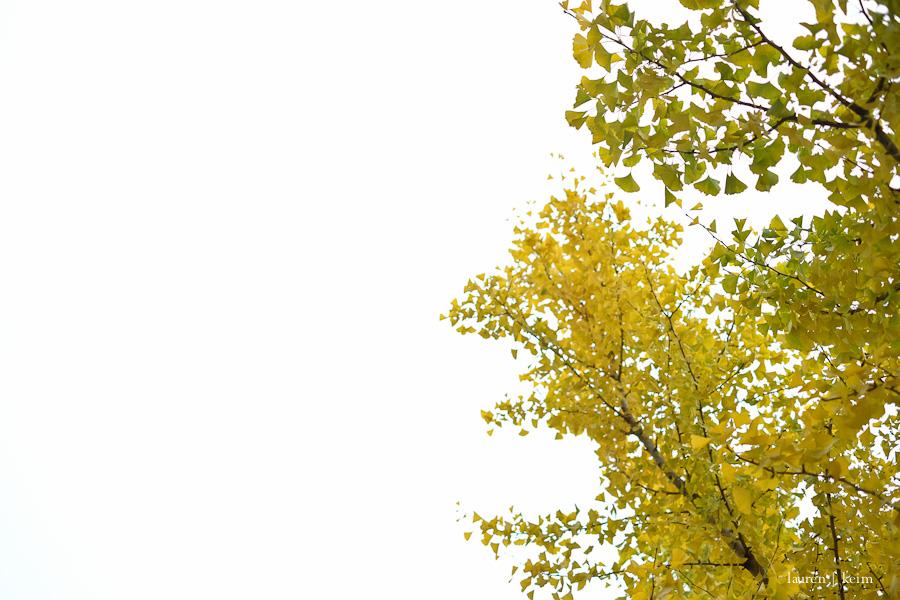 November skies | Fuji X-E2, 35mm