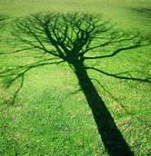 Thoughtful Tree.jpg