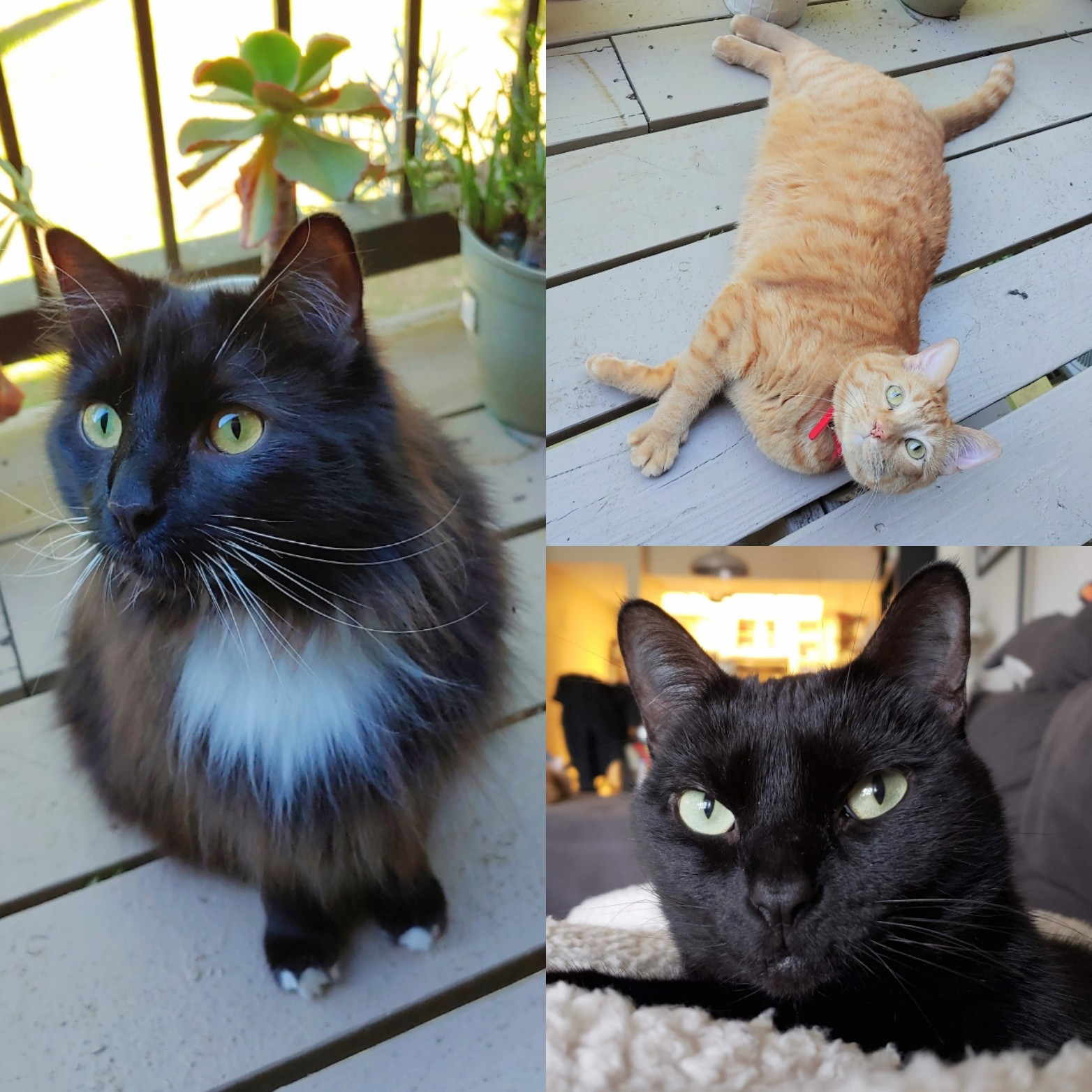 ARIAN'S CATS -