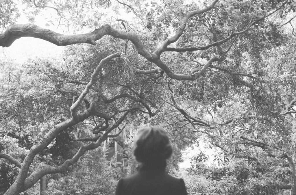 in awe of the oak grove